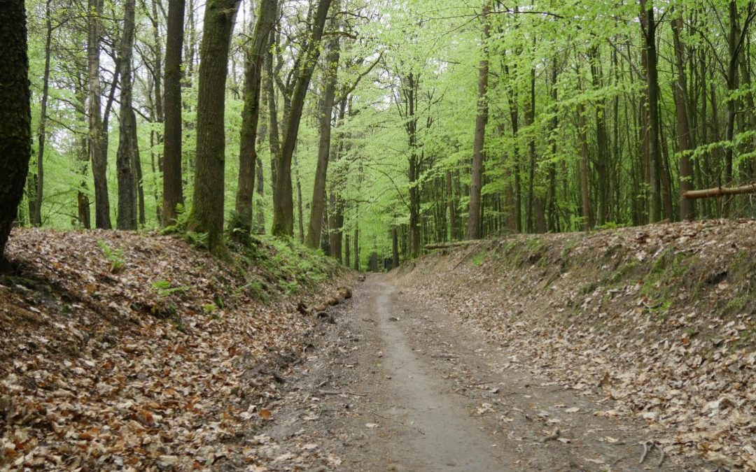 NIEUW: Dieren – Arnhem Trail in samenwerking met de NS