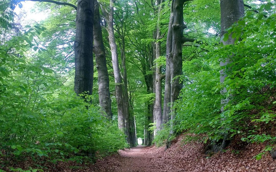 Loop mee op 15 juli: Rhenen-Arnhem Trail